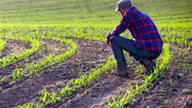 Photo of Fermierii primesc subvențiile în avans de la APIA