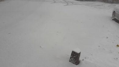 Photo of FOTO! Ninge la Runcu!