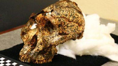 """Photo of Oamenii de ştiinţă au descoperit un craniu vechi de două milioane de ani, aparţinând unui """"văr"""" al omului"""