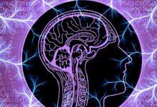 """Photo of Cum influențează """"zgomotul"""" din creier comportamentul uman"""