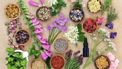 Photo of Remedii din plante pentru problemele de sănătate cotidiene